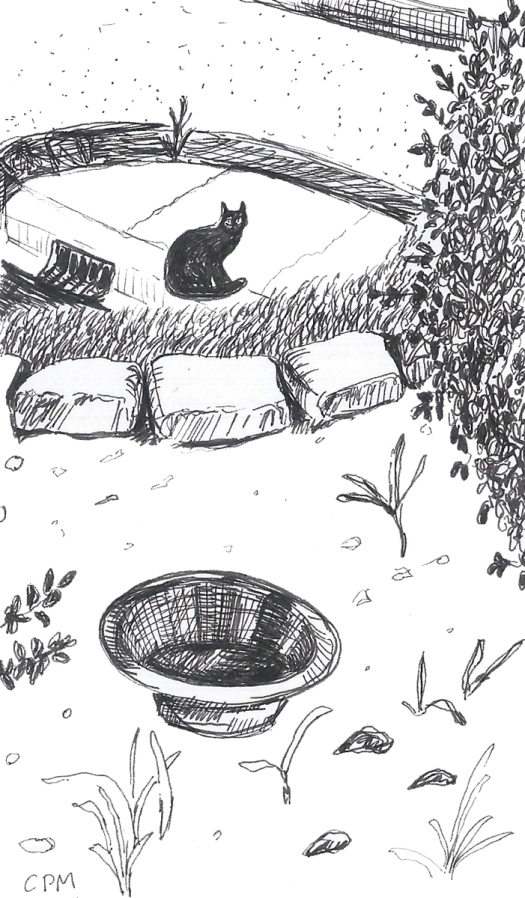 Ink drawing of feral cat waiting for food.